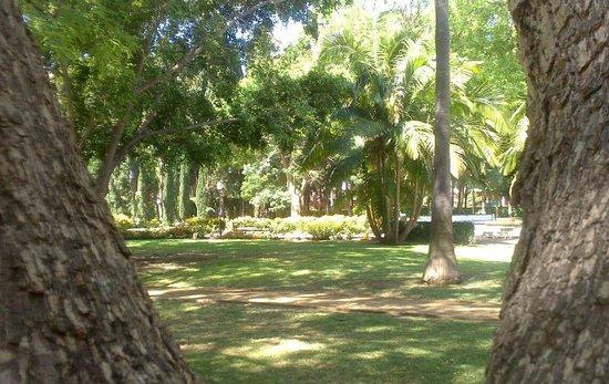 Nueva ordenanza municipal y sanciones por las zonas verdes